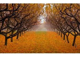 地球,秋天,小路,叶子,黄色,树,绿树成荫,壁纸,图片