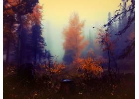 地球,秋天,树,雾,自然,森林,壁纸,图片