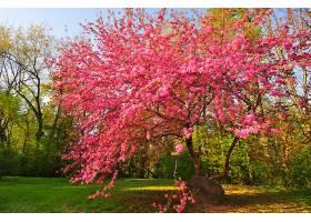 地球,花,花,自然,树,粉红色,花,弹簧,壁纸,图片