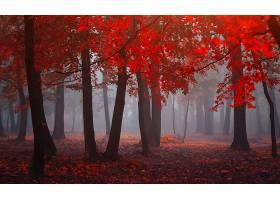 地球,秋天,森林,树,自然,雾,深度,关于,领域,壁纸,图片
