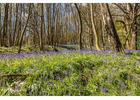 地球,花,花,自然,森林,弹簧,紫色,花,壁纸,图片