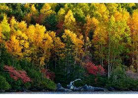 地球,秋天,水,自然,森林,树,叶子,壁纸,图片