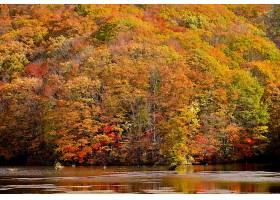 地球,秋天,自然,树,叶子,壁纸,图片