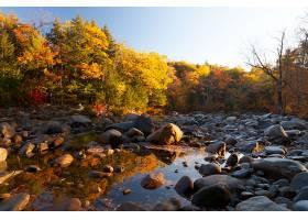 地球,秋天,自然,树,叶子,岩石,反射,快活的,溪流,壁纸,图片