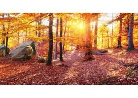 地球,秋天,自然,树,叶子,森林,阳光,壁纸,图片