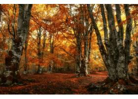 地球,秋天,自然,树,森林,叶子,壁纸,图片