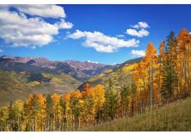 地球,秋天,自然,树,森林,风景,山,天空,云,壁纸,图片