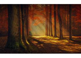 地球,秋天,自然,树,阳光,壁纸,图片