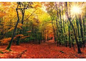 地球,秋天,自然,森林,树,小路,阳光,壁纸,(1)图片