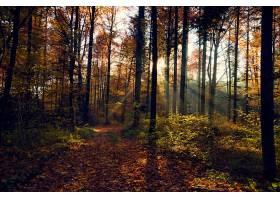 地球,秋天,自然,森林,树,小路,阳光,壁纸,图片