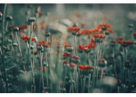 地球,花,花,自然,领域,橙色的,花,Bokeh,壁纸,图片
