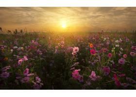 地球,花,花,自然,领域,粉红色,花,日落,云,壁纸,图片