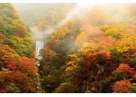 地球,瀑布,瀑布,自然,森林,雾,树,秋天,壁纸,图片
