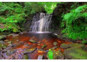 地球,瀑布,瀑布,自然,岩石,蕨,森林,壁纸,图片