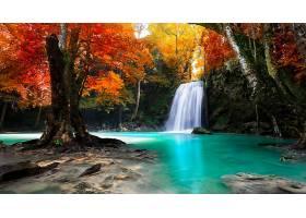地球,瀑布,瀑布,秋天,叶子,树,森林,壁纸,(1)图片