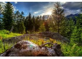 地球,阳光,自然,树,壁纸,(1)图片