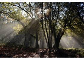地球,阳光,自然,树,壁纸,(2)图片