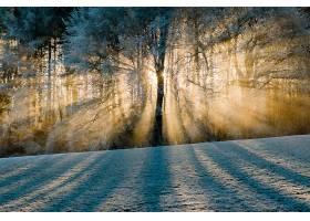 地球,阳光,自然,树,壁纸,(5)图片
