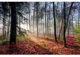 地球,阳光,自然,树,森林,壁纸,(3)图片