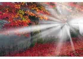 地球,阳光,自然,树,秋天,壁纸,图片