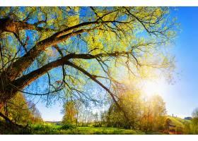 地球,阳光,自然,树,风景,草,壁纸,图片