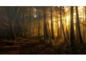 地球,阳光,自然,森林,小路,树,壁纸,图片