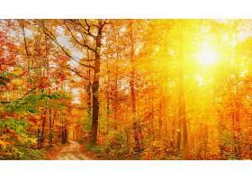 地球,阳光,自然,森林,小路,树,秋天,明亮的,壁纸,图片