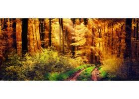 地球,阳光,泥土,路,自然,森林,树,秋天,叶子,壁纸,图片
