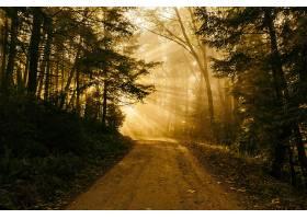 地球,阳光,泥土,路,路,自然,树,森林,壁纸,图片