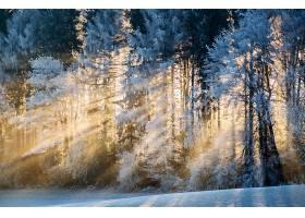 地球,阳光,自然,冬天的,雪,壁纸,图片