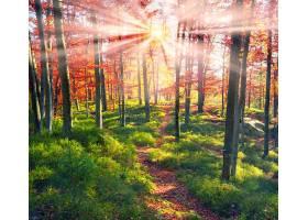 地球,阳光,自然,森林,小路,秋天,树,叶子,壁纸,图片