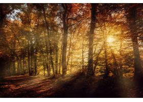 地球,阳光,自然,森林,树,小路,秋天,壁纸,图片