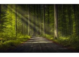 地球,阳光,自然,森林,树,泥土,路,壁纸,(1)图片