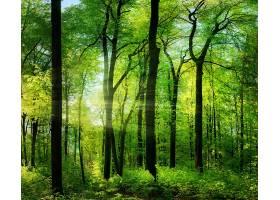 地球,阳光,自然,森林,树,温室,壁纸,图片