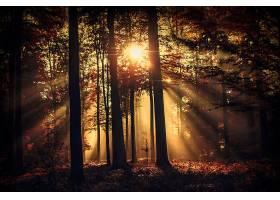 地球,阳光,自然,森林,树,轮廓,壁纸,图片