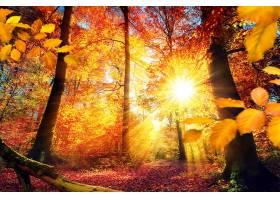 地球,阳光,自然,森林,秋天,树,叶子,太阳,壁纸,图片