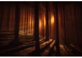 地球,阳光,自然,森林,黑暗,壁纸,图片