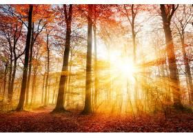 地球,阳光,自然,秋天,树,森林,阳光,壁纸,图片