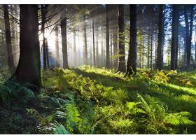 地球,阳光,自然,蕨,森林,壁纸,图片