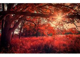 地球,树,树,森林,秋天,叶子,红色,阳光,日出,壁纸,图片