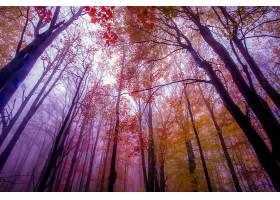 地球,树,树,森林,秋天,叶子,苍穹,季节,自然,壁纸,图片