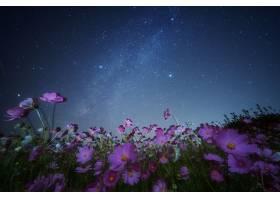 地球,宇宙,花,自然,夜晚,花,天空,布满星星的,天空,粉红色,花,明图片