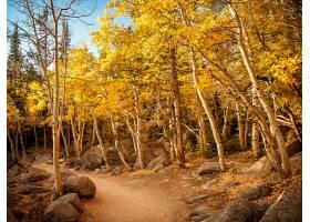 地球,小路,岩石,自然,森林,树,秋天,桦树,壁纸,图片