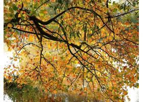 地球,树,树,秋天,叶子,树枝,河,壁纸,图片