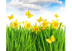 地球,水仙花,花,艺术的,花,蝴蝶,黄色,花,壁纸,图片