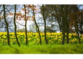 地球,水仙花,花,花,黄色,花,弹簧,快活的,自然,壁纸,图片