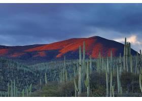 地球,沙漠,仙人掌,自然,风景,壁纸,