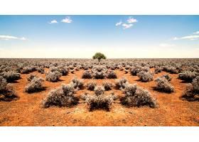 地球,沙漠,地平线,布什,树,寂寞的,树,风景,自然,壁纸,