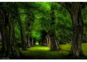 地球,树,树,绿色的,小路,公园,绿树成荫,壁纸,图片