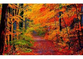 地球,小路,秋天,叶子,树,森林,叶子,壁纸,图片